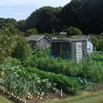 Allotments West Tarring small