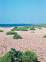 Shoreham Beach and vegetated shingle