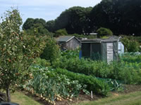 Allotments West Tarring